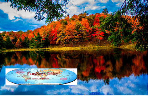 Gatineau Fall Foliage-FNT-small