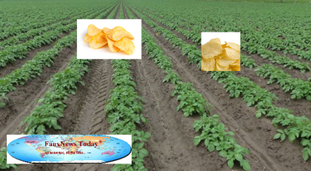 Ontario Potato Field-FNT-Small