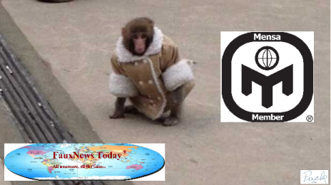 Ikea Monkey-FNT-Small.png