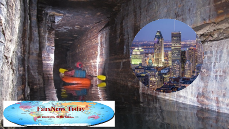 Montreal-Ice-Cave-FNT-Small.png